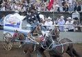Wagon and horses Calgary Royalty Free Stock Photo