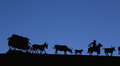 Wagon train in silhouette complete with mules horse cowboy cattle and Royalty Free Stock Image