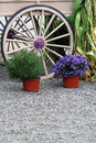 Wagon wheel and flower pots a large spoked a corn stock are used as creative garden landscaping decoration Stock Images