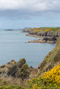 Wales coast path pembrokeshire uk near from caerfai bay to st non s bay in the national park towards ramsey island follows Royalty Free Stock Photo