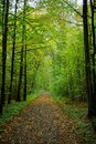 Walk through the green damp fall forest landscape for serenity Royalty Free Stock Photo