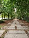 Walk the path of serenity Royalty Free Stock Photo