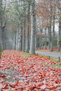 Walk among the trees and leaves in autumn Royalty Free Stock Photos