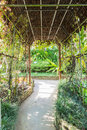 Walk way in butterfly garden Royalty Free Stock Photo