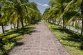 Walk way in coconut trees Royalty Free Stock Photo