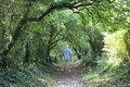 Walker on footpath framed by trees on summer day man in shorts walking along a an avenue of Royalty Free Stock Photos