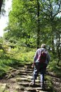 Walker on steps, footpath through woodland glade. Royalty Free Stock Photo