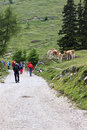 Walkers at dobrac mountain carinthia austria a group of is passing a herd of cows the slopes of the dobratsch the end of the Royalty Free Stock Photo