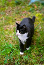 Walking black cat Royalty Free Stock Images