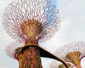 Walking bridge on super trees in gardens by the bay singapore artificial tree grove as a vertical with skyway path at Stock Image