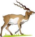 Walking deer on the meadow