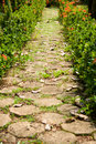 Walking through the flowers block paving way for a stroll in garden Stock Photography