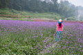 Walking in lavender fields Royalty Free Stock Photo