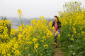 Walking in oilseed rape flowers Royalty Free Stock Photo