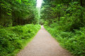 Walking Path in Capilano Park, Vancouver Royalty Free Stock Photo
