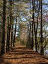 A Walking Path In A Peaceful Setting Royalty Free Stock Photo