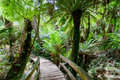 Walking path in tropical rain forest among lush ferns Royalty Free Stock Images