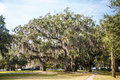 Walking paths among oak trees with spanish moss draped over in a park Stock Image