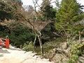 Walking Tracks at Miyajima Island, Hiroshima, Japan Royalty Free Stock Photo
