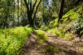 Walking trail through the forests of Uvas Canyon County Park, green Miner's Lettuce covering the ground, Santa Clara county,
