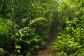 Walking trail in the jungle Royalty Free Stock Photo