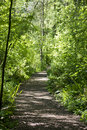 Walking trail in the woods Royalty Free Stock Photo