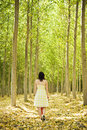 Walking on woods Royalty Free Stock Photo