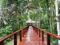 Walkway in the Amazon jungle, Peru Stock Image