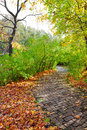 Walkway in autumn park Royalty Free Stock Images