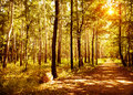 Walkway in autumn park warm sunny day beautiful autumnal forest panoramic landscape scenic nature of woodland fall season Stock Images