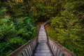 Walkway at Blue Pools Track, New Zealand Royalty Free Stock Photo