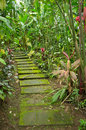 Walkway through a dense tropical rainforest Royalty Free Stock Photos