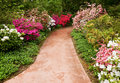 Walkway through flower garden Stock Image