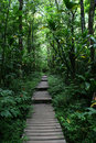 Walkway through Hawaii forest Royalty Free Stock Photo