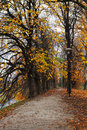 Walkway leading into the autumn park in tallinn estonia Royalty Free Stock Image