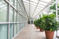Walkway long of glass shelter and wall with stretch of potted plant Royalty Free Stock Photos