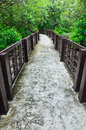 Walkway in mangrove forest concrete the rayong thailand Royalty Free Stock Photo
