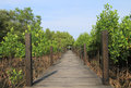 Walkway through mangroves forest wooden Royalty Free Stock Images