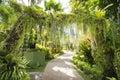 Walkway in the shady botanic garden nature Royalty Free Stock Photo