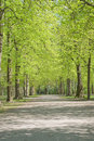 Walkway Through Spring Scenery Royalty Free Stock Image