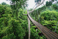 A Walkway in the Thai Jungle Royalty Free Stock Photo