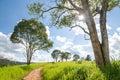 Walkway To Nature