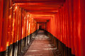 Walkway between torii gates a long through a passage made of closely packed afternoon sun illuminates the with a bright vibrant Stock Photography