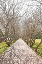 Walkway with tree shadows in park Royalty Free Stock Photo