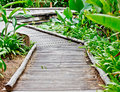 Walkway in the tropical garden 1 Royalty Free Stock Photo
