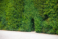 Walkway trough a green natural wall of trees Royalty Free Stock Image