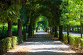 Walkway Under A Green Natural ...