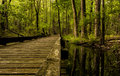 Walkway through wetlands a the at mt briar washington county maryland Royalty Free Stock Images