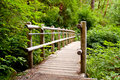 Walkway in wilderness Stock Images