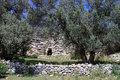 Wall of aquaduct patara and olive trees in turkey Stock Images